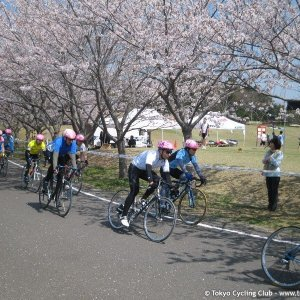Hanami while racing....
