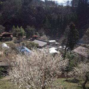Spring has come to a village