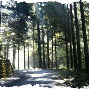 deserted forestry roads...
