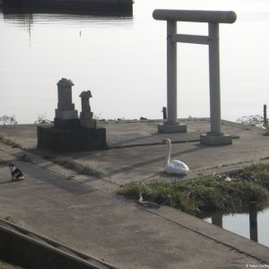 Swan and cat and torii and shrine