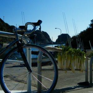ubiquitous Miura Daikon, here drying in the sun of Miyakawa Harbor