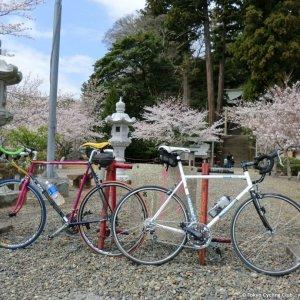 Sakura and bikes