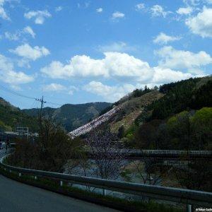 "Approaching the famous ""Manba Koinobori"" (Gunma Pref)"