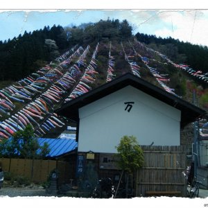 "The famous ""Manba Koinobori"" (colors have faded - repeated use..."
