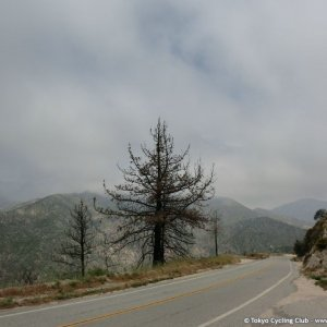 Angeles Forest Rd