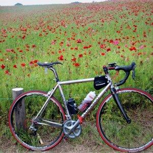 Scarlet poppy fields, Higashi-Chichibu