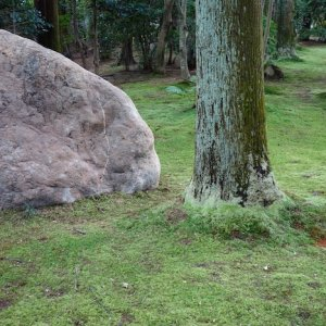 rock tree moss